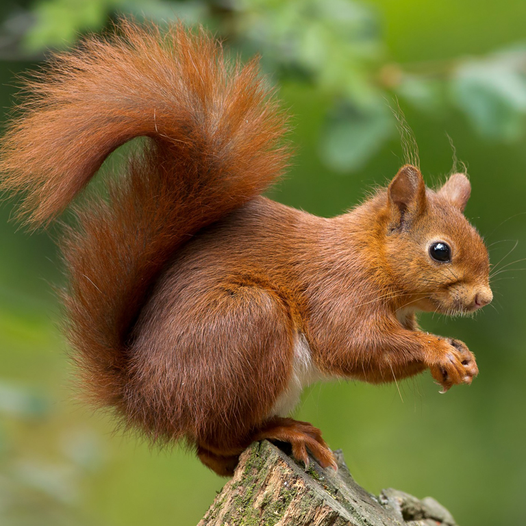 London Wildlife- Your Wildlife Removal Experts